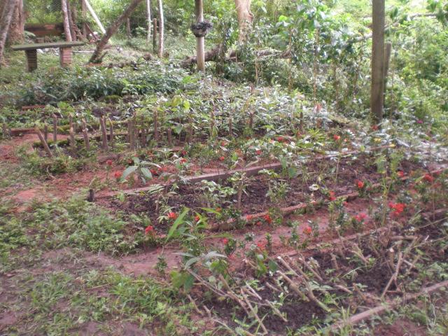 Proyecto vivero ferestal punta verde proyecto vivero for Proyecto productivo de vivero forestal