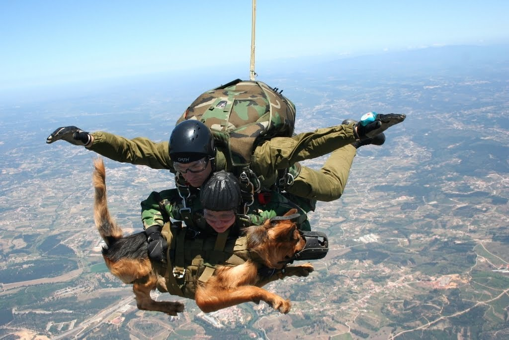 Holstered Attack Dogs Funny