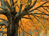 walpapere gratis cu peisaje din natura noi