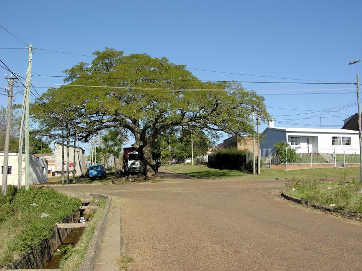 Un árbol en la calle...