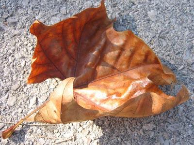 Fotos grátis de Outono: Folha no chão