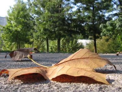 Fotos grátis de Outono: Folhas no chão