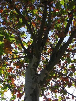 Fotos grátis de Outono: Árvore