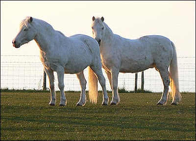 Koleksi Foto Kuda Ternak Piaraan