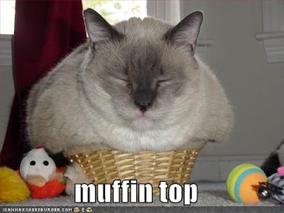 funny fat cat pictures. Fatty Fatty Fat Fat
