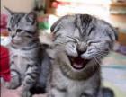 El gato se ríe de los versos para cebollitas!!!!