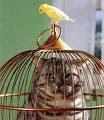 ¡La venganza del canario !