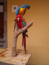 Unos papagayos jugando en el museo de Colón