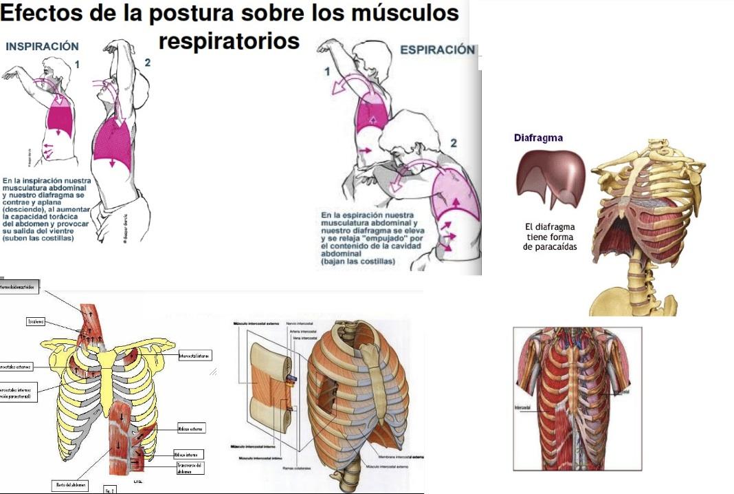 Pilates Ejercicio Físico y Salud: RESPIRACIÓN