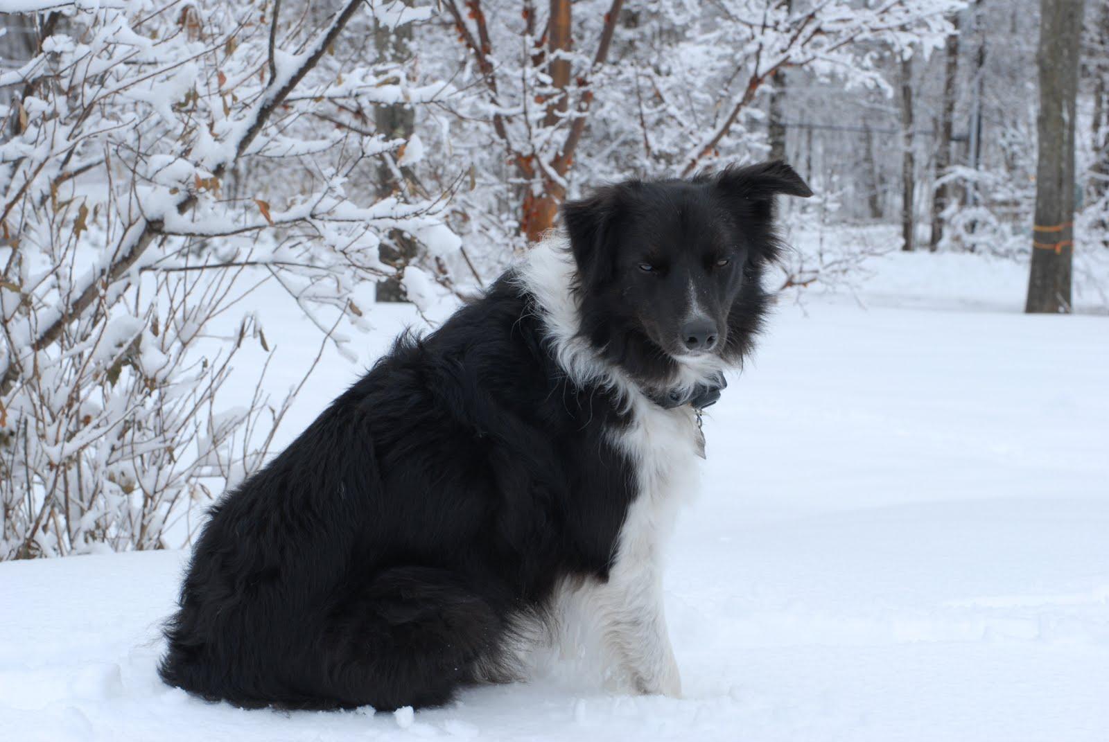 [Fresh+snow+and+pups+01-18-10+061.jpg]