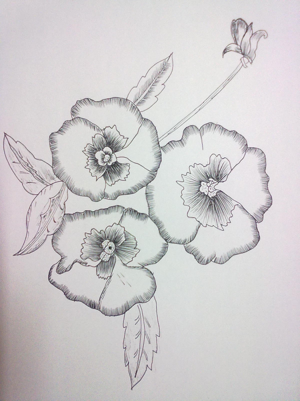 beginning the journey of drawing flowers drawing with ink pen