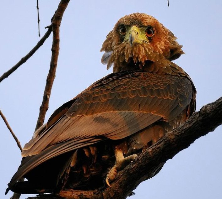 http://3.bp.blogspot.com/_QtH2zTVl70M/THOeTfUQqSI/AAAAAAAAIwk/46Uc7CwZ3Jw/s1600/animal-safari07.jpg