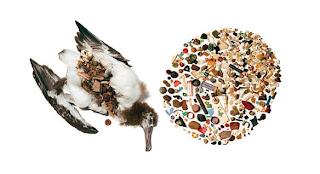Peixe de plástico