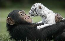 O mundo só precisa de mais amor!
