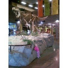 A day with the dinosaur's