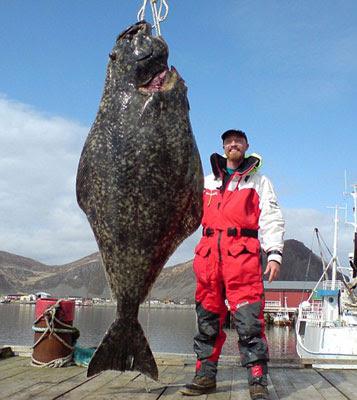 超大比目魚 2公尺 - 英漢捕獲超過2公尺的超大比目魚