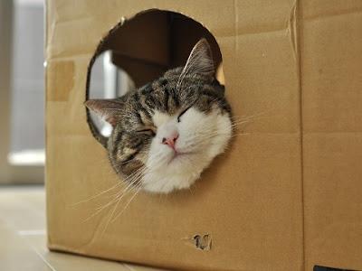 紙箱貓 小圓 - 紙箱貓 小圓 忍者貓 Maru