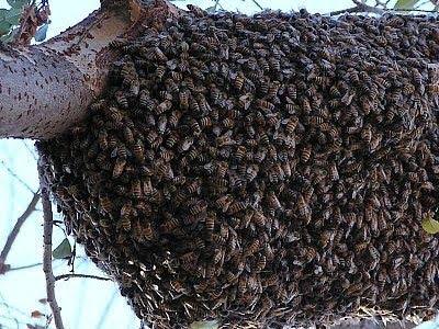 最暴力蟲蟲 - 五種最暴力蟲蟲