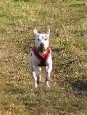 Mollie Dog