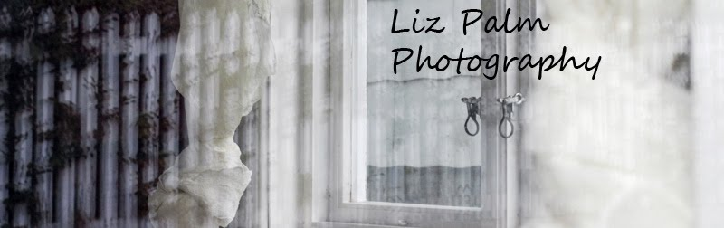 Liz Palm Photography