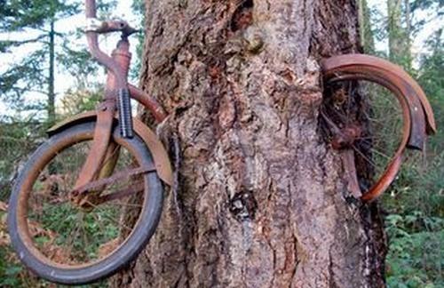 Kelaparan, Pohon-pohon Ini Makan Sepeda, Motor, Bangku, Batu dan Signboards