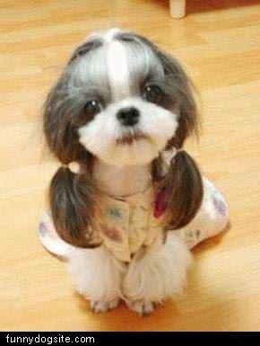 imagenes animales chistosos - Los animales más chistosos de Internet, ¿perros o gatos