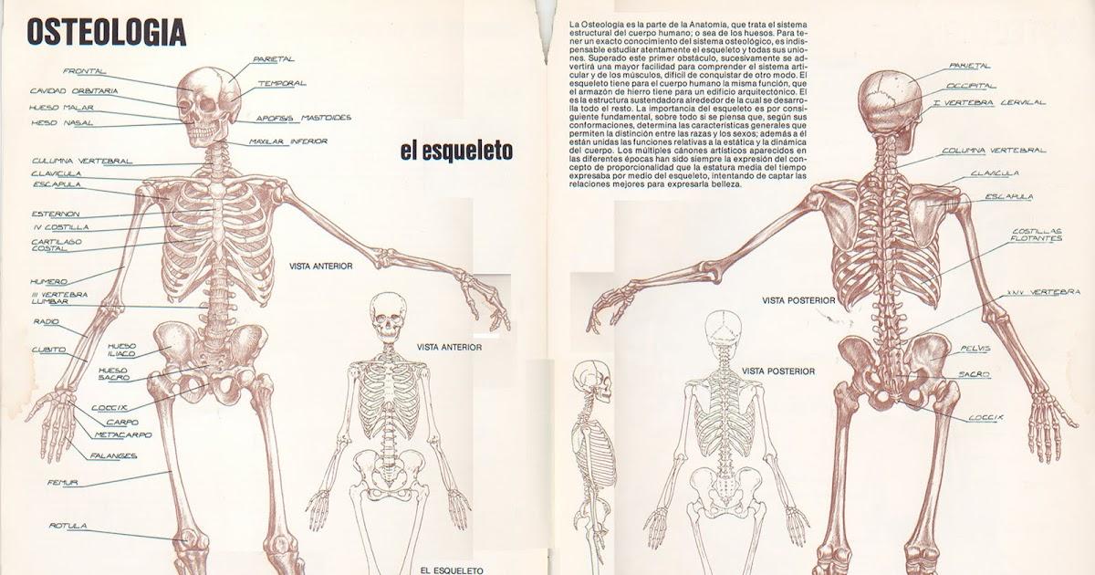 eganamarshall: Figura humana Anatomia 1