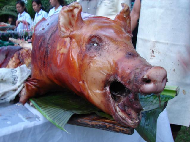 [pig+roast]