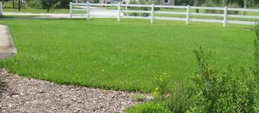 Ginny's Freedom Lawn