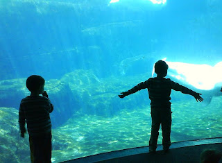 Children amazed by Beluga Wales at Vancouver Aquarium