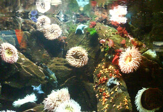 Starfish and Anemones at Vancouver Aquarium