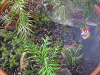 Fog in forest in miniature garden