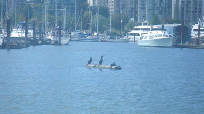 Ocean birds in Stanley Park, Vancouver