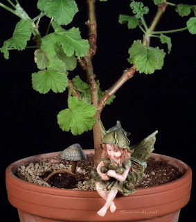 Miniature living pelargonium bonsai Snowflake with one root exposed, angel and shell-lantern
