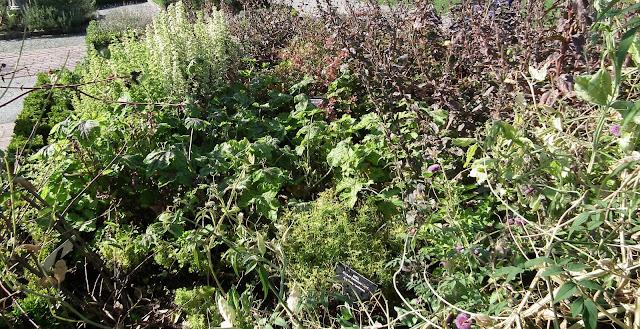 Fragrant plants at VanDusen Botanical Garden
