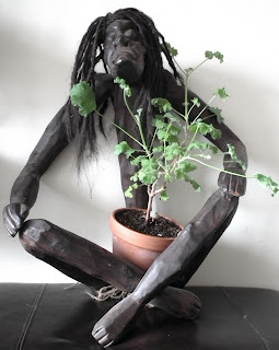 Asmat handcarved wood statue with Snowflake prebonsai