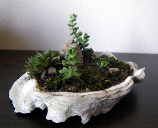 Oyster shell centerpiece with accent plants