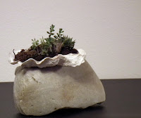 Oyster shell with succulent plants on crystalline calcite rock