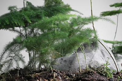Saikei with seven asparagus fern plants and mountain stone