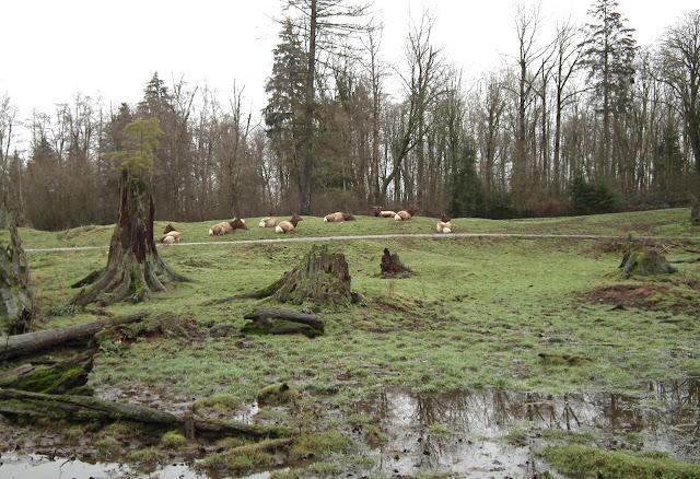 Aldergrove Zoo - landscape