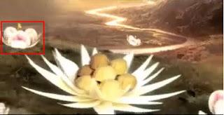 pelita+tulip