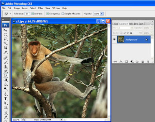Cara Mempertajam Foto Lewat Photoshop ~ Agen Download Film, Game