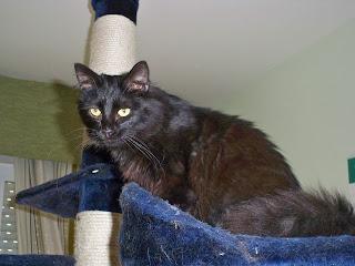 ZHORA (leucemia) Gatos+Febrero+1+004