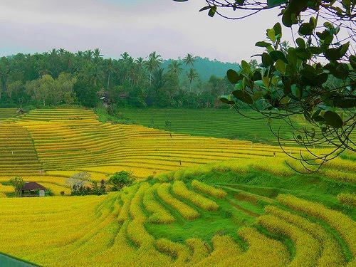 keindahan panorama indahnya alam desa pertanian