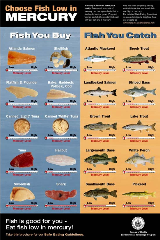 Ib water treatment categories of water pollutants for What fish has the most mercury