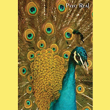 Pavo real azul