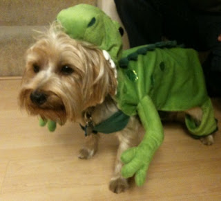 Dog as lizard