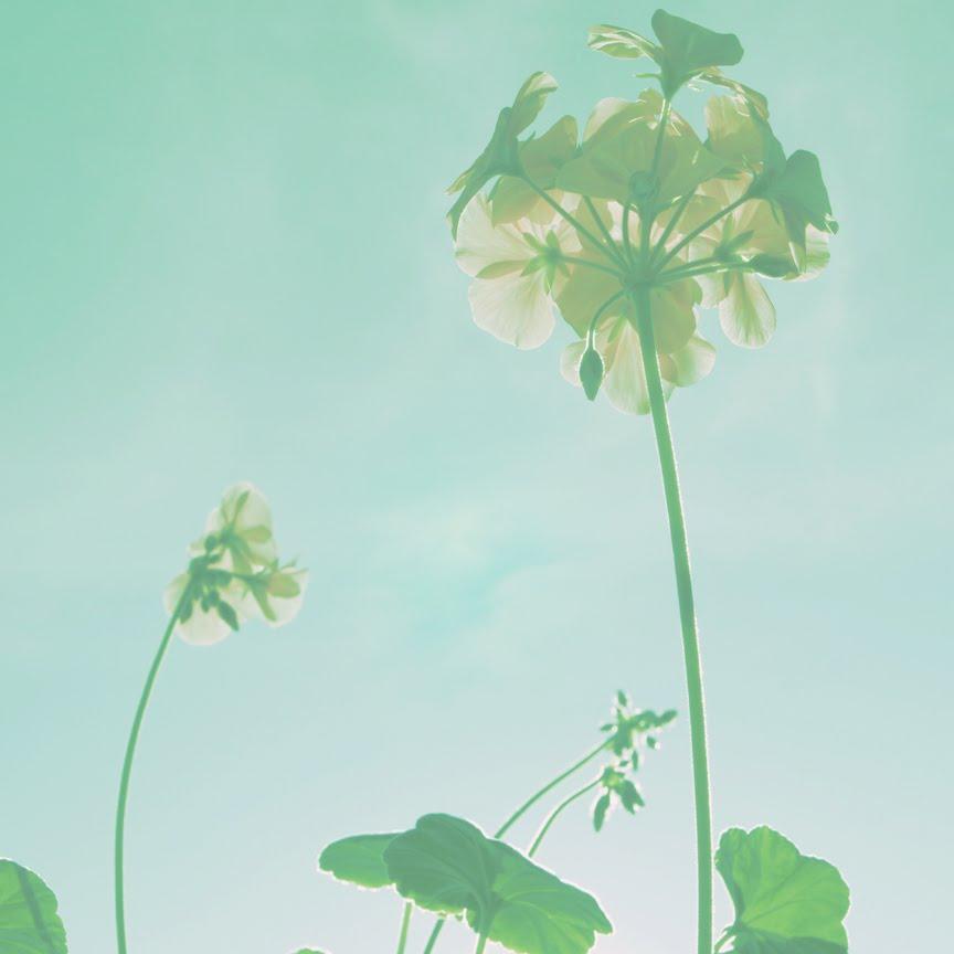 [flower2840xsmalljpg]