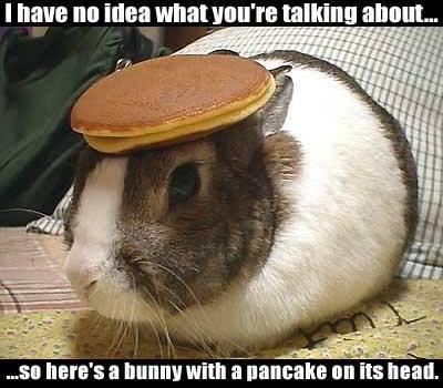 little bunny looks happy
