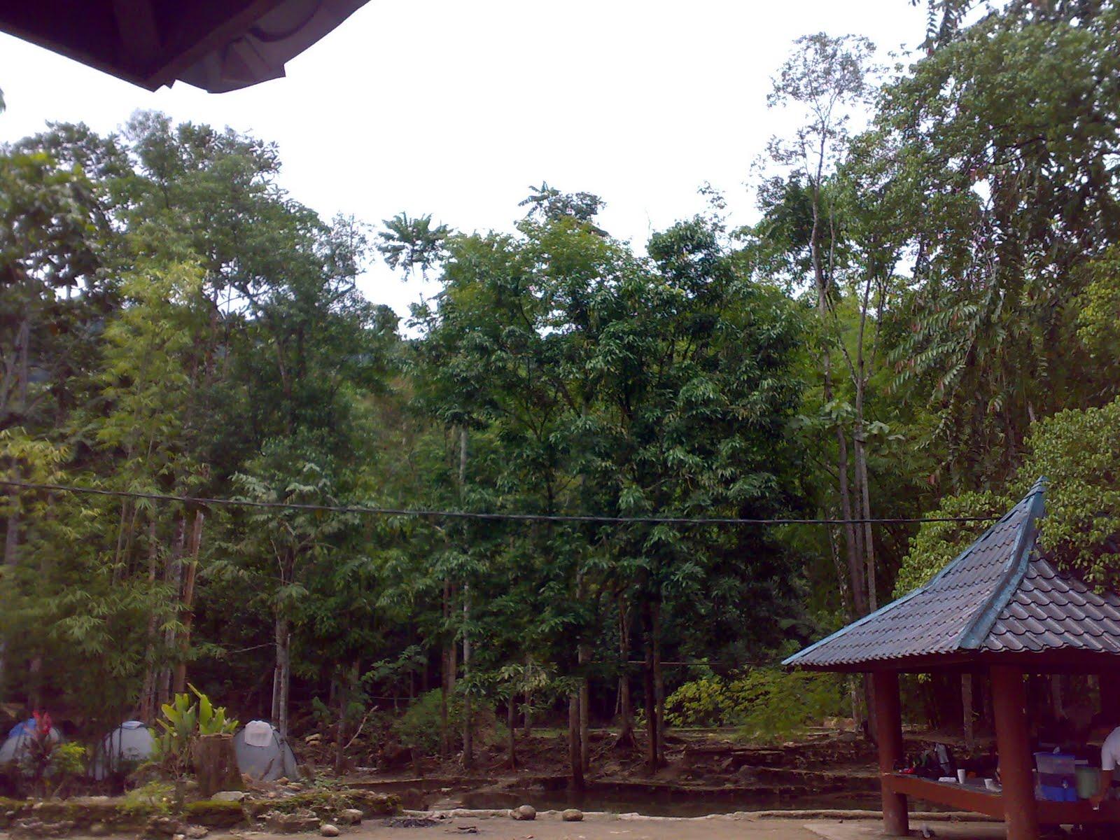 Intan azlina nikmati keindahan alam the woods resort for Alissara thai cuisine